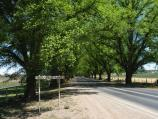 Bacchus Marsh / The Avenue of Honour / The Avenue of Honour sign, view west along road near eastern end