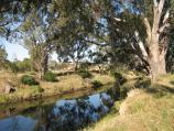 Bacchus Marsh / Rupert Vance Moon Reserve, The Avenue of Honour at Lerderderg River / View east along river