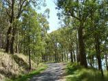 Ballarat / Mount Buninyong Road, ascending mountain / View along road