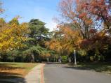 Beechworth / La Trobe University / Driveway through the campus