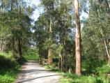 Belgrave / Birdsland Reserve, Mt Morton Road, Belgrave Heights / Pathway through bush between eastern lake and car park