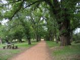 Castlemaine / Castlemaine Botanical Gardens / Pathway