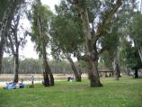 Cobram / Thompsons Beach at Kennedy Park / BBQ and picnic areas