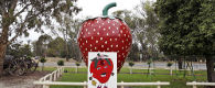 The Big Strawberry, Koonoomoo