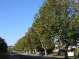 Colac / Botanic Gardens, Fyans Street / View east along Fyans St at Gellibrand St