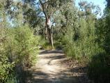 Cranbourne / Royal Botanic Gardens Cranbourne, Ballarto Road / Pathway at Stringybark Picnic Area