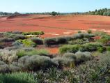 Cranbourne / Australian Garden at Royal Botanic Gardens Cranbourne / North-easterly view across Red Sand Garden from Dry River Bed