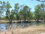 Dimboola / Golf Course Road along Wimmera River / View north-east across river at turn-off to weir
