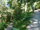 Dromana / Heronswood, Latrobe Parade / Pathway through forest along eastern edge of property