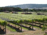 Dromana / Dromana Valley Wines, Nepean Highway / View north-west across winery towards Mt Martha