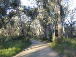 Echuca / Victoria Park, Scenic Drive and Murray River / View along the shady Scenic Drive