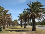 Elwood / Robinson Reserve, Marine Parade at Barkly Street / Southerly view though park along Marine Pde