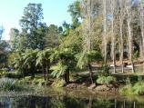 Emerald / Emerald Lake Park / Ferns and walking track at south-eastern end of Lake Treganowan