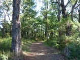 Emerald / Emerald Lake Park / Walking track near Bellbird Picnic Area