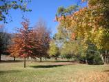 Harrietville / Tauare Park, Pioneer Park and Ovens River East Branch / Vibrant Autumn colours in Tauare Park