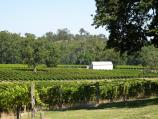 Healesville / Boat O'Craigo winery, Maroondah Highway / Southerly view over vineyard