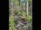 Healesville / Watts River, Maroondah Highway north-east of Healesville / View south-west along Watts River from bridge