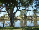 Horsham / Wimmera River at southern end of Firebrace Street / View south across river
