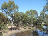 Horsham / Wimmera River at Apex Island / View west along river from footbridge