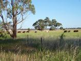 Horsham / Wimmera River on west wide of weir and at wetlands / Southerly view across fields at southern end of weir