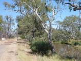 Horsham / Wimmera River on west wide of weir and at wetlands / View west along pathway on south side of river, west of weir