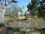 Horsham / Wimmera River on west wide of weir and at wetlands / View north across river near weir