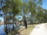 Horsham / Wimmera River at native grass reserve, east end of Baillie Street / View south along pathway beside river