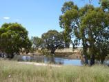 Horsham / Wimmera River at native grass reserve, east end of Baillie Street / View east through grasslands towards river