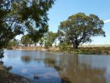 Horsham / Wimmera River at native grass reserve, east end of Baillie Street / View east across river