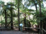 Kallista / Grants Picnic Ground, Monbulk Road / Ferns and bush along Margaret Lester forest walk