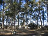Lake Bolac / Lake Bolac, northern end fronting Glenelg Highway / Picnic areas