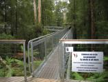 Lavers Hill / Otway Fly tree top walk, Phillips Track, Beech Forest / Entrance to tree-top walk
