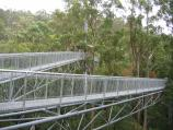 Lavers Hill / Otway Fly tree top walk, Phillips Track, Beech Forest / Walkway