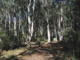 Marysville / Keppels Lookout, Paradise Plains Road / Picnic area at lookout