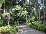 Melbourne / Royal Botanic Gardens / Path through rain forest
