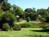 Melbourne / Royal Botanic Gardens / Canna bed rain garden