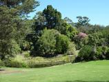 Melbourne / Royal Botanic Gardens / View towards Nymphaea Lily Lake