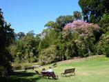 Melbourne / Royal Botanic Gardens / Lawns at western side of Nymphaea Lily Lake