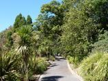 Melbourne / Royal Botanic Gardens / Path along southern side of Nymphaea Lily Lake