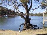 Mildura / Kings Billabong / Murray River at Psyche Bend