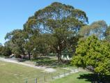 Moe / Apex Park and Lions Park, Waterloo Road / View through Lions Park