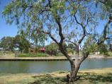 Moonee Ponds / West bank of Maribyrnong River, north of Maribyrnong Road / View east across river towards Boathouse Cafe
