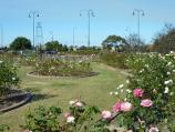 Morwell / Morwell Centenary Rose Garden, Maryvale Crescent and Commercial Road / View through rose garden towards Commercial Rd