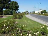 Morwell / Morwell Centenary Rose Garden, Maryvale Crescent and Commercial Road / View east through rose garden along north side of Commercial Rd opposite Avondale Rd