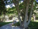 Mount Dandenong / Mount Dandenong Observatory - English Gardens / The Wishing Tree