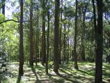 Mount Dandenong / Mount Dandenong Observatory - surroundings / Forest walk near Observatory Rd