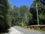 Mount Dandenong / Mount Dandenong Arboretum, Ridge Road / View south-west along Ridge Rd at Arboretum entrance