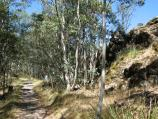 Mount Macedon / Camels Hump, Cameron Drive / Path approaching summit