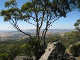 Mount Macedon / Camels Hump, Cameron Drive / View north at summit