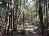 Mount Macedon / Stanley Park, Salisbury Road / Path at base of falls